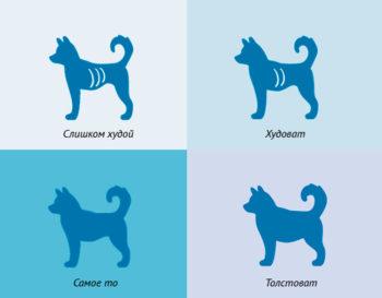 Определение кондиции собаки