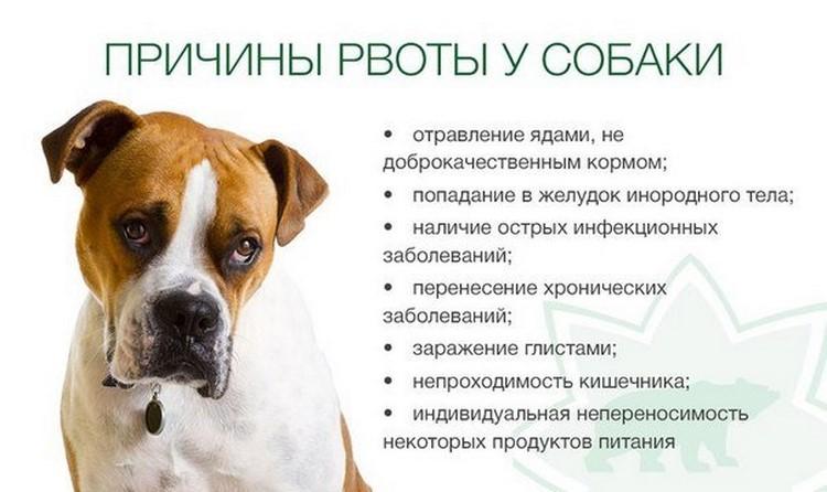 Почему собаку рвет