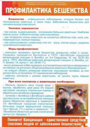 Профилактика бешенства у животных