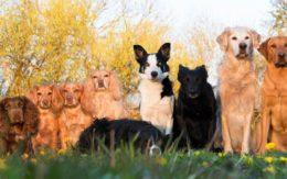 Разные собаки