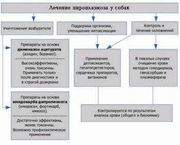 Схема лечение пироплазмоза