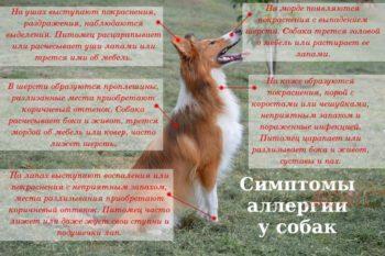 Симптомы аллергии у собак