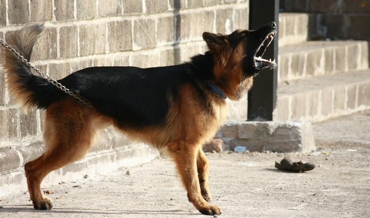 Собака лает на улице