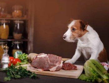 Собака с едой