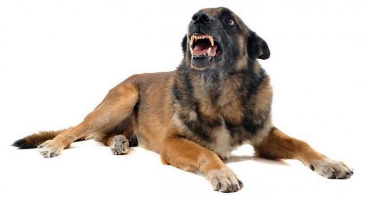 Собака скалится