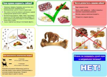 Советы по натуральному кормлению собак