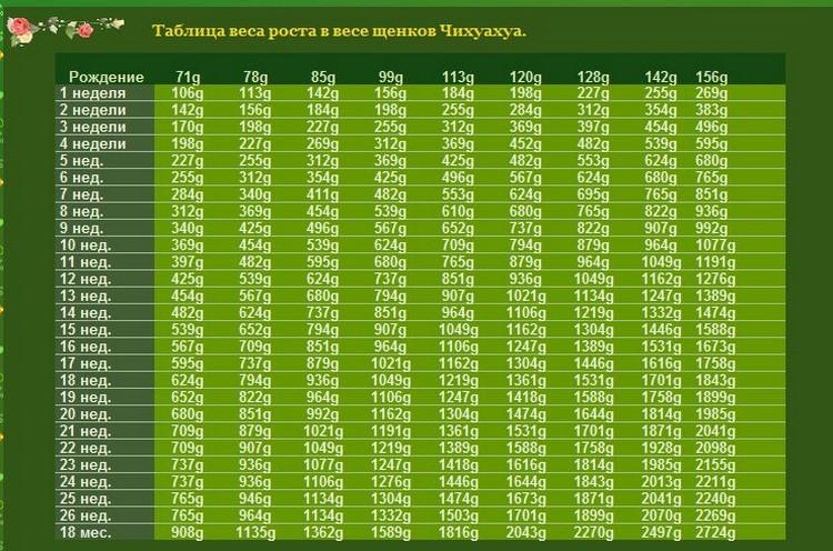 Таблица веса и роста чихуахуа по есяцам