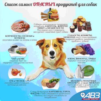 Запретные продукты для собак