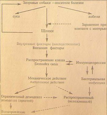 Заражение демодекозом