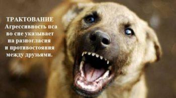 Значение во сне укусила собака